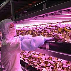 晃商×ファームシップ ~大規模の完全LED野菜工場「名張シティファーム」竣工~