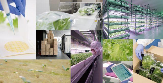 ファームシップ×イノプレックス:最新植物セミナー3回シリーズ開催